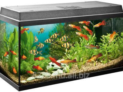 Buy Aquariums