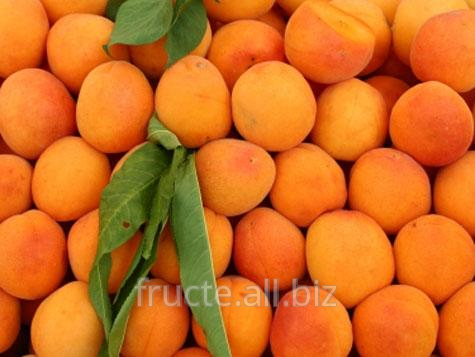 Buy Apricots
