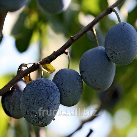 Купить Prune Moldova