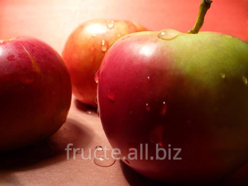 Купить Яблоки в Молдове для экспорта