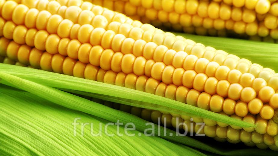 Buy The corn is ordinary
