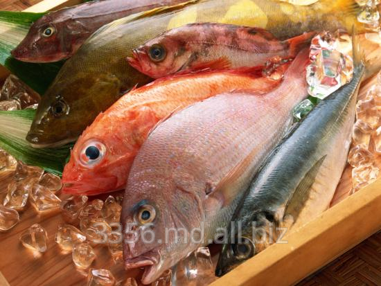 Buy Ingredients for production from fish