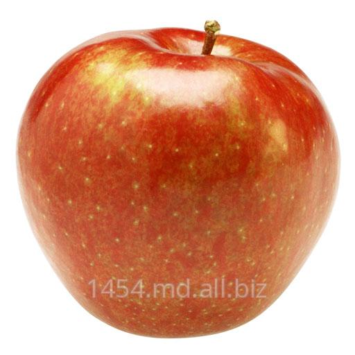 Купить Яблоки в Молдове