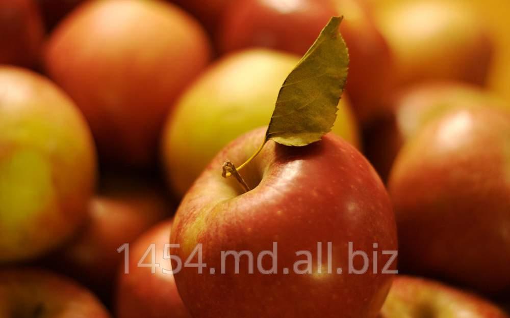 Купить Яблоки Джонагоред
