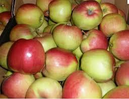 Купить Яблоки осенние