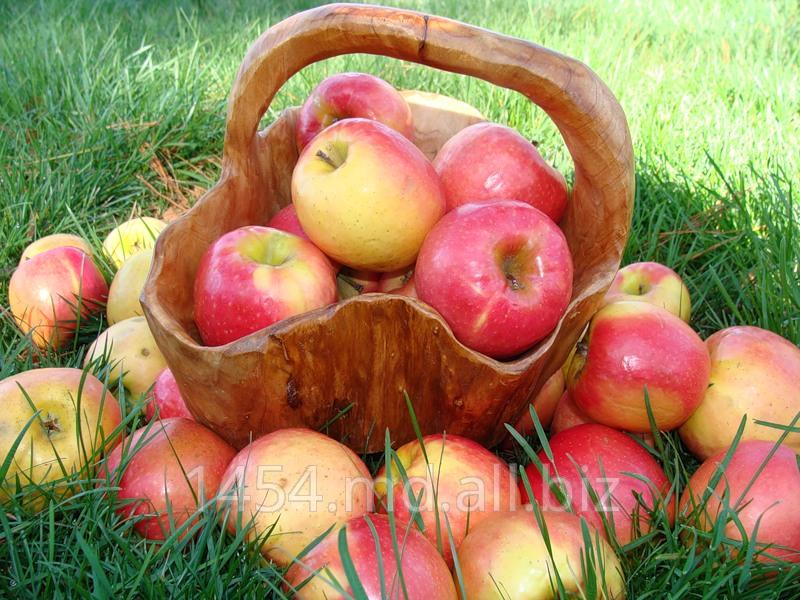Купить Яблоки Флорина