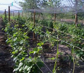 Проволока оцинкованная для виноградников в Молдове