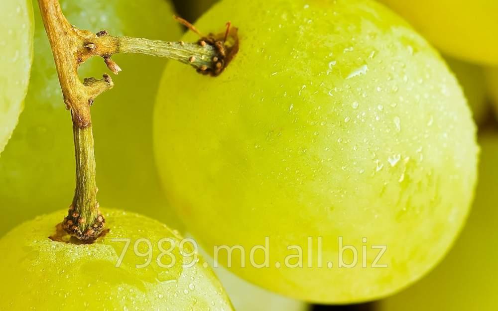 Виноград в Молдове