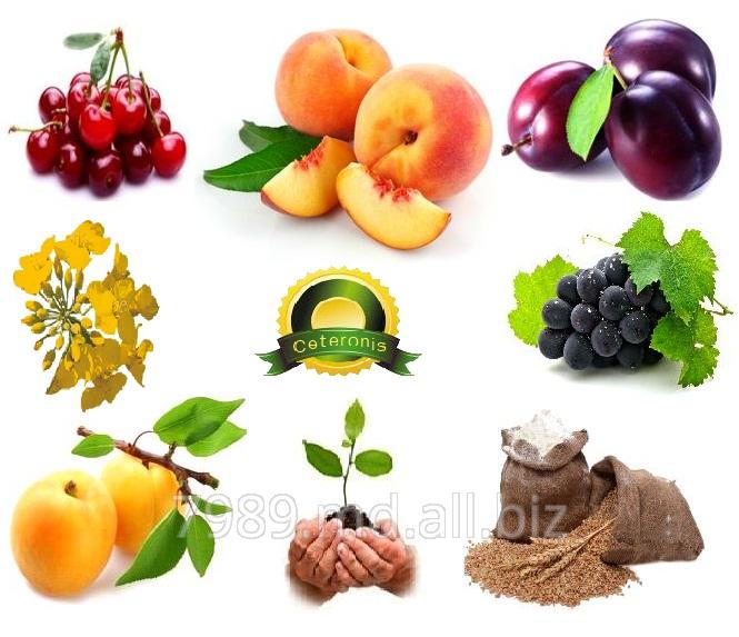 Выращивание фруктов,Ceteronis-ST,SRL