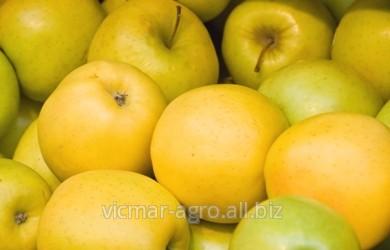 Купить Яблоки голден в Молдове