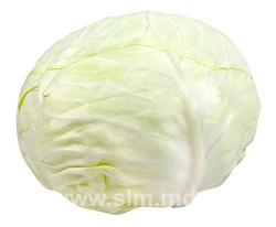 Buy Cabbage fresh in Moldova