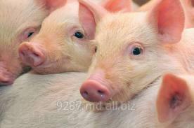 Купить Свинина купить в Молдове