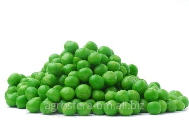 Купить Семена зеленого горошка, сухой горошек