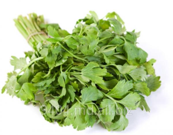 Buy Parsley. Fennel. Celery