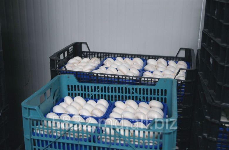 Buy Champignons wholesale in Moldova