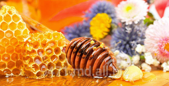 Buy Honey from forest forbs