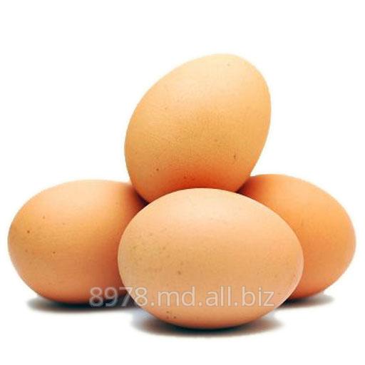 Купить Яйца куриные в Молдове