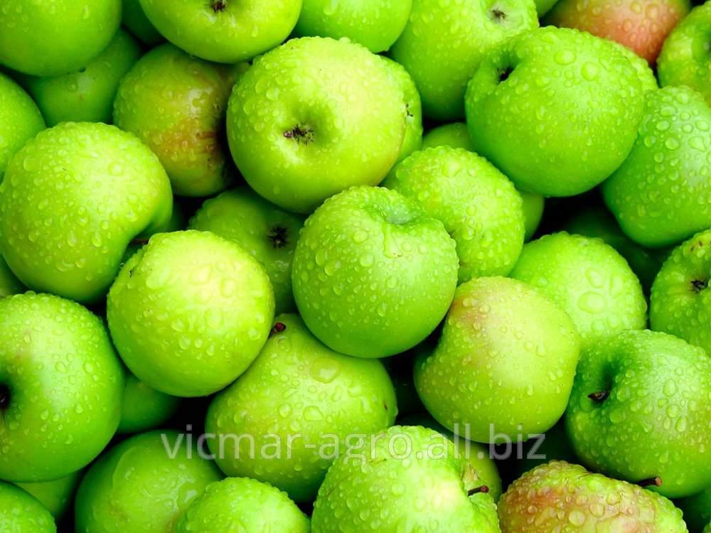 Купить Яблоки, экспорт из Молдовы