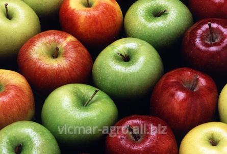 Купить Яблоки осенние в Молдове