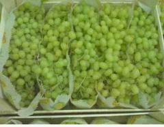 Grapes of kishmishny grades