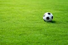 Sports lawn