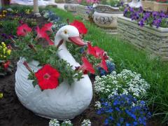 Flori pentru gradina, Flowers for a garden