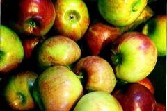 Apples Kortland, Moldova