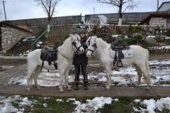 Миниатюрные лошади, пони