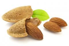 Saplings almonds grade Hramov's Firstborn