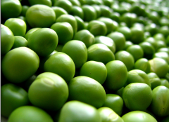 بذور لزراعة الخضراوات