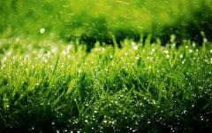 Трава для газона, газонная трава, трава газонная,