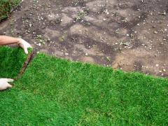 Газоны рулонные, готовый газон в Кишиневе