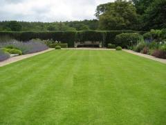 Sports lawn, sports lawn seeds, lawn grass sports