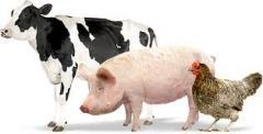 Premixes, premixes for animals