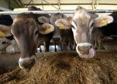 Vitamins D for forages of animals