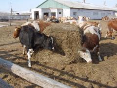 Комбикормы Витамины Е для кормов животных