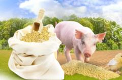 Bioadditives for pigs