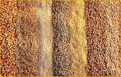 Комплексы витаминно-минеральные ветеринарные