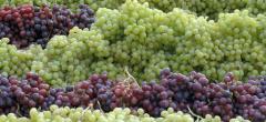 Виноград разных сортов,Виноград Молдова