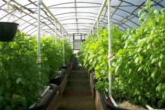 Greenhouses usual in Moldova, Greenhouses at the
