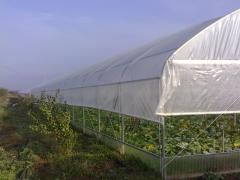 Greenhouses with lateral ventilation in Moldova
