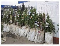Саженцы деревьев плодовых пород