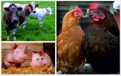 Комбикорма для животных под заказ
