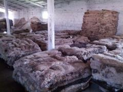 Raw materials leather and fur in Moldova, Skins