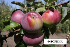 Manzanas Florina
