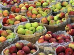 Las manzanas en la Moldova