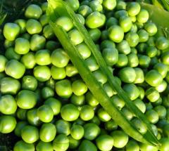 Peas grain