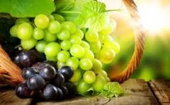 Grapes of table varieties