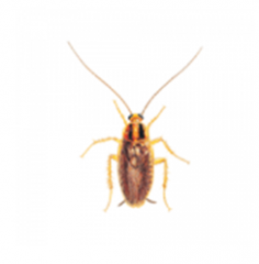 Deltametrin from cockroaches