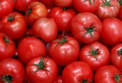 Tomatoes, tomatoes fresh